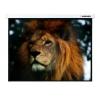 Экран Lumien Master Control LMC-100128 16:10, купить за 8 830руб.