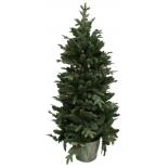 Новогодняя елка Beatrees Winter Melody 1.8 м, купить за 7 960руб.